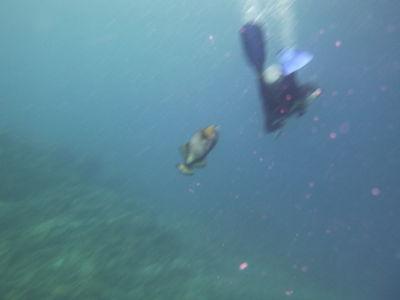 Arjan werd aangevallen door een triggerfish