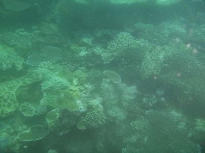 Koraal tijdens het duiken
