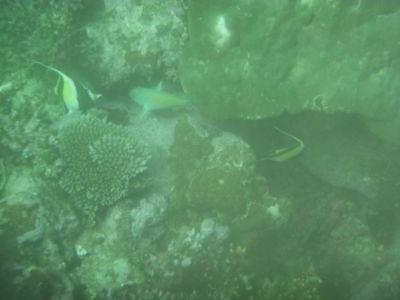 Tijdens het duiken