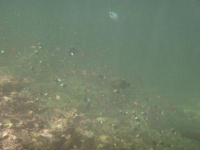 De onderwater wereld