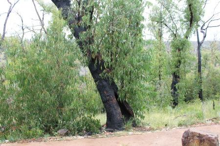 Verbrande boomstam