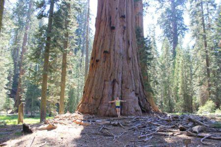 Wat ben je klein bij een reuzachtige Sequoia Tree